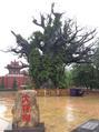 洪洞大槐树