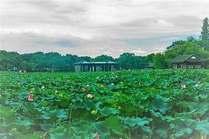 【我是达人】存几个隐藏在西湖深处只有老杭州人才知道的好地方