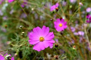 【INMIX免费体验】追着夏天的尾巴,浪在乌兰布统大草原