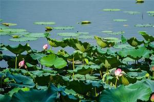 【我是达人】趁夏秋之际跟山野君一起去西湖散心
