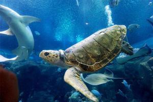 长沙海底世界游记