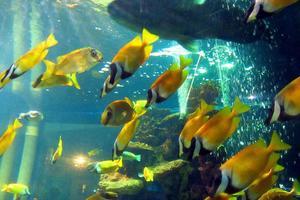 人与自然和谐共处---长沙海底世界