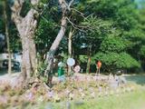 科隆千树园