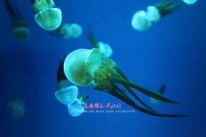 【我是达人】浪漫樱花武汉行·极地海洋世界