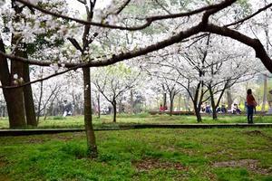 【把世界装进书里】最美赏樱,东湖樱花园