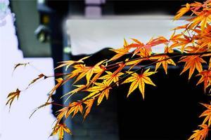 【我是达人】太湖东山——秋色缠绵,岁月静好