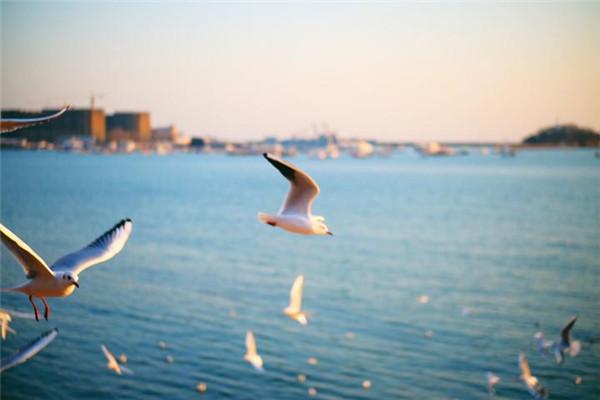 【我是达人】赴冬日栈桥之约,赏一曲海鸥群舞
