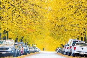 【我是达人】2017飞跃加拿大:如画江山—自驾加拿大之三枫叶大道