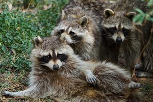 """【我是达人】""""六一""""了,带着你的宝宝去看动物宝宝吧!"""