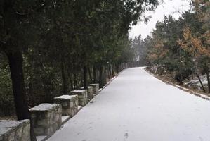 【暖冬双旦礼】终于等到你,入冬里的第一场雪