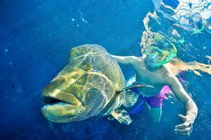 【我是达人】大侠视界|情迷湛蓝,浪在黄金海岸;心留斑斓,潜在大堡礁