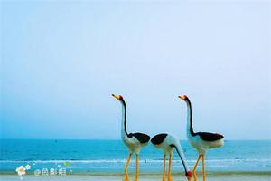 【我是达人】茂名浪漫海岸+御水古温泉三天两夜欢乐之旅