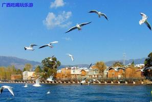 【暖冬双旦礼】碧海蓝天抚仙湖,海鸥围着我飞舞