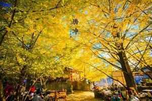 【我是达人】【解锁腾冲】银杏、温泉、热气球丨想去的地方,一定会到达
