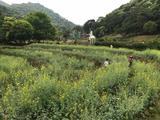 二龙山生态园