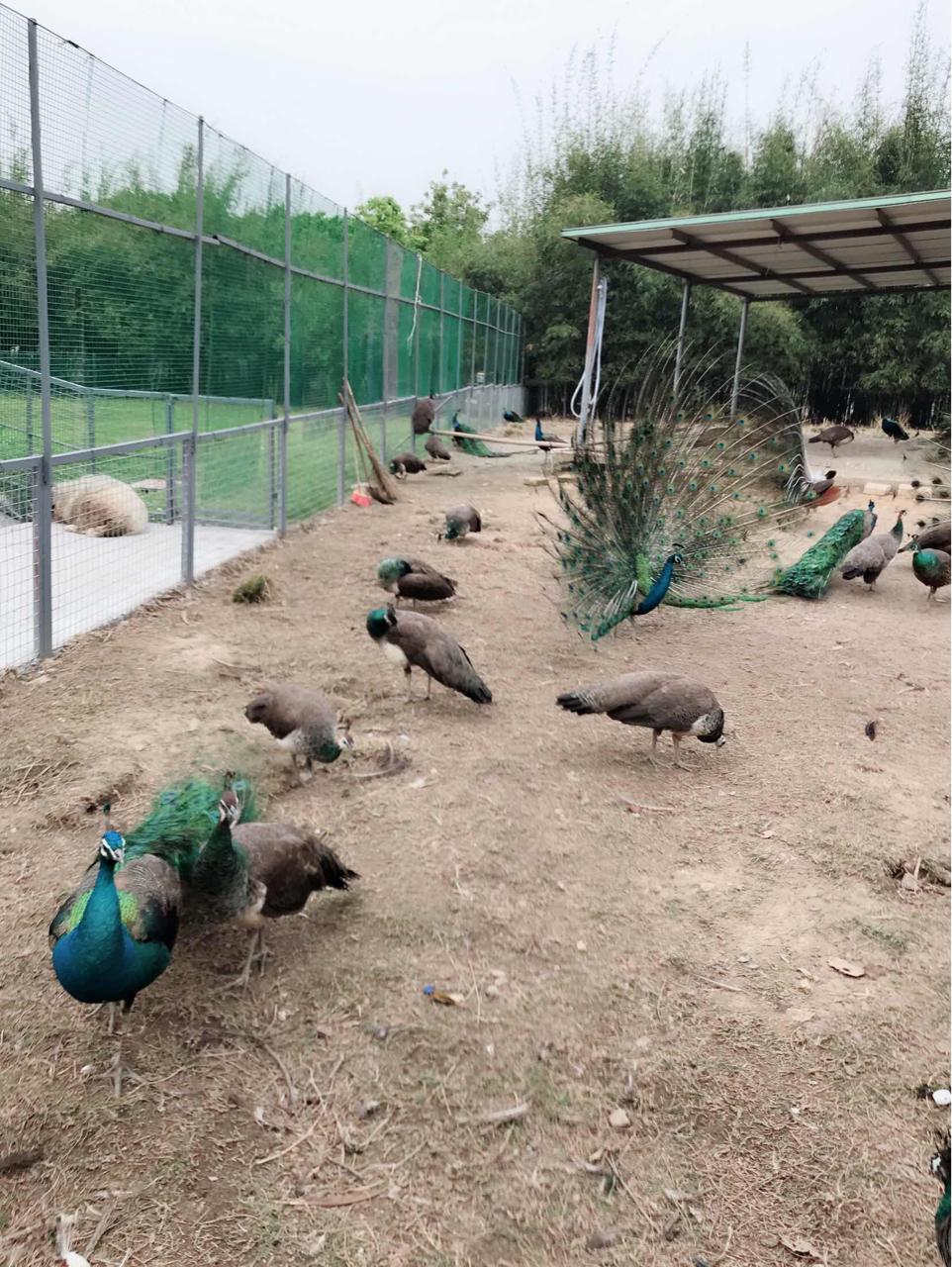 东莞香市动物园-东莞市东莞香市动物园旅游指南
