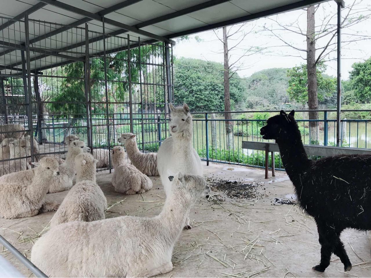 东莞唯一的动物园,两只国宝超可爱,暑假亲子游的好去处