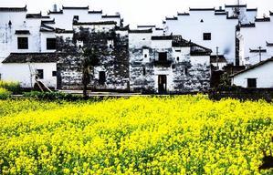 【我是达人】中国最美乡村:欢乐颂在此取景,金庸祖籍发源地,踏青扫黄正当时
