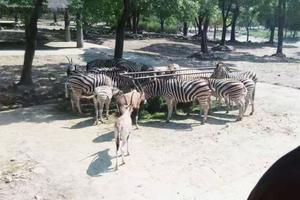 【kneipp春油季】亲触大自然,零距离观看动物——记上海野生动物园之行