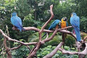 广州长隆野生动物园和珠海长隆海洋王国两人(一大一小)四天游记【秘籍】加全【攻略】