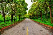 上海滨海森林公园