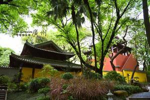 【我是达人】5天玩转广州城|逛古寺,寻历史,压马路,探校园,吃美食