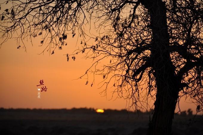 《我是达人》丝路旅痕-兰州-张掖-敦煌-嘉峪关-金塔-黑城-怪树林-额济纳旗胡杨林-银川