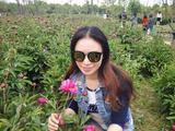 2018上海新浜牡丹节—体验国花的芬芳