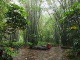 桂林訾洲岛