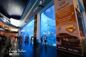 【我是达人】【迪拜】探访沙漠梦幻水族馆DubaiAquarium