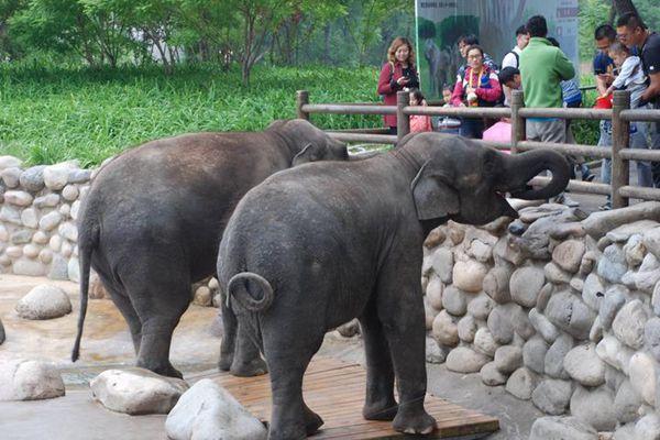 【旅途无止净】和娃一起去郊游——北京野生动物园