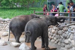 【卡赫旅途无止净】和娃一起去郊游——北京野生动物园