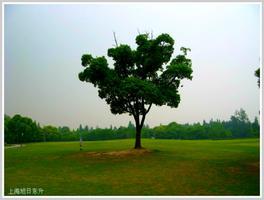 【我是达人】上海滨江森林公园随拍(森林、湿地篇)