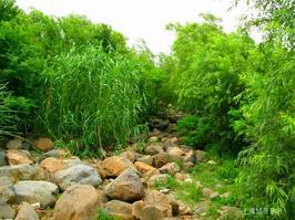 【我是达人】《吴淞炮台湾湿地森林公园(四)》(干凅的滩涂)