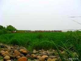 【我是达人】《吴淞炮台湾湿地森林公园(五)》(湿地滩涂)