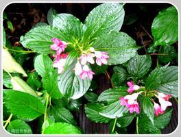 【我是达人】上海滨江森林公园随拍(花、草篇)