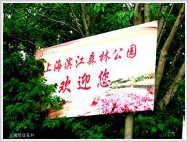 【我是达人】上海滨江森林公园随拍(河流篇)