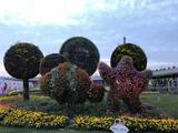 浦江郊野公园奇迹花园