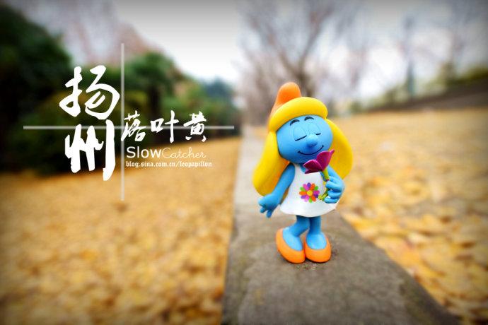 【美在路上】扬州11月,银杏黄