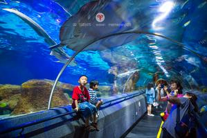【我是达人】潜入蔚蓝深海世界寻梦童年快乐记忆