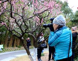 【我是达人】实拍:在梅中寻找最艳丽的拍摄