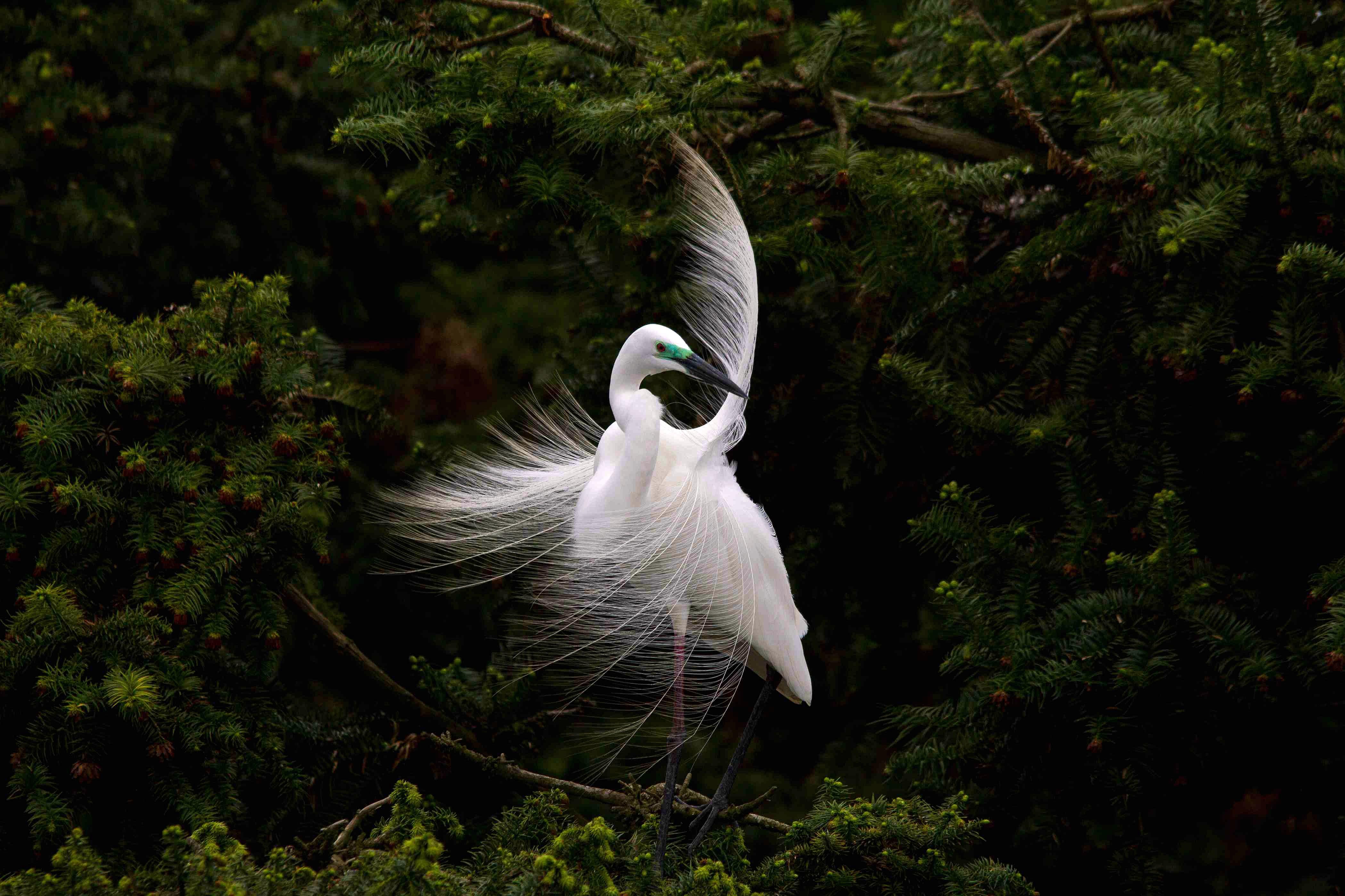 【我是达人】海上佛国:鸟人们最爱的世外桃源
