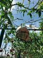 马陆葡萄主题公园
