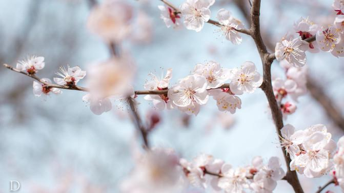【我是达人】长城同人中的古延庆,四月不错花海短视频图片