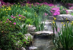【我是达人】上海滨江森林公园杜鹃园美如仙境
