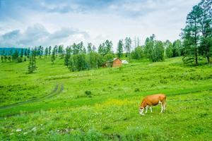 色彩绚烂又凉爽的新疆,才是中国最美的夏天!