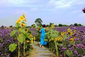 【我是达人】金色向日葵遇上紫色花海,六月来寻梦园邂逅醉美景色!