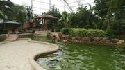 上海浦江源温泉热带雨林温泉