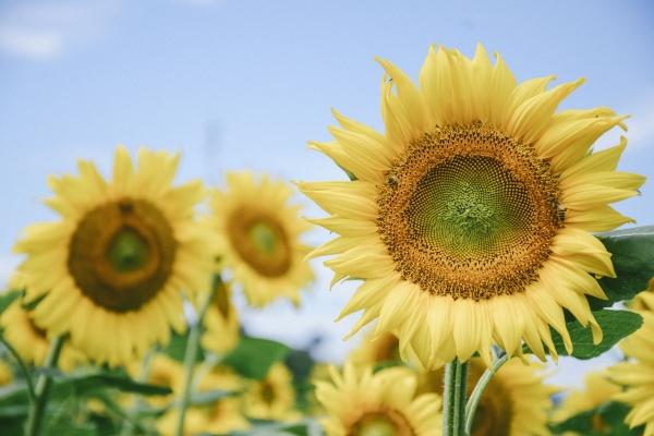 """【我是达人】北京高温频发,逃离碳炉帝都,""""花""""式玩法让你清凉一夏!"""