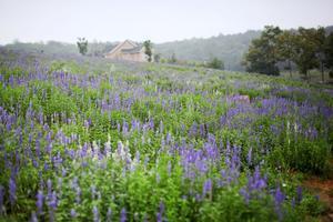 十一国庆节,畅游华东地区最大的牧场巴布洛生态谷